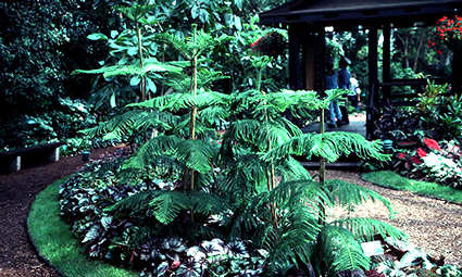 A group of 5'-6' tall plants.