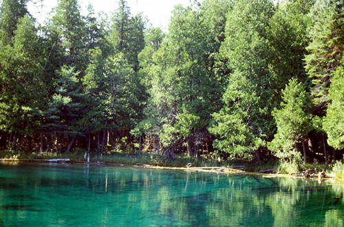 "The water is actually this color.  It is a 40 foot deep, spring feed pool called ""The Big Spring"". Over 10,000 gallons of water gush into this pool from fissures in the limestone. Most of the trees around the edges are Arborvitae (Thuja occidentalis)"