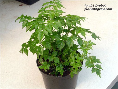 9 10a 11 Plants To Grow Plants Database By Paul S Drobot
