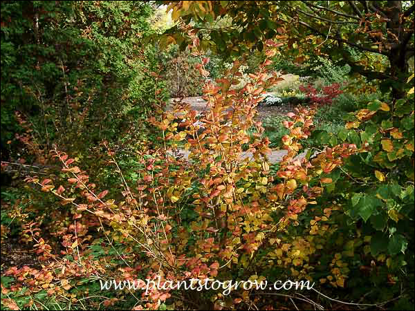 fall foliage color