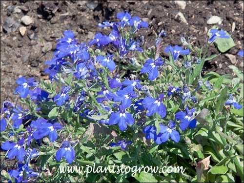 9 11 Plants To Grow Plants Database By Paul S Drobot