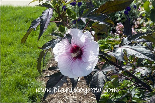5 Plants To Grow Plants Database By Paul S Drobot